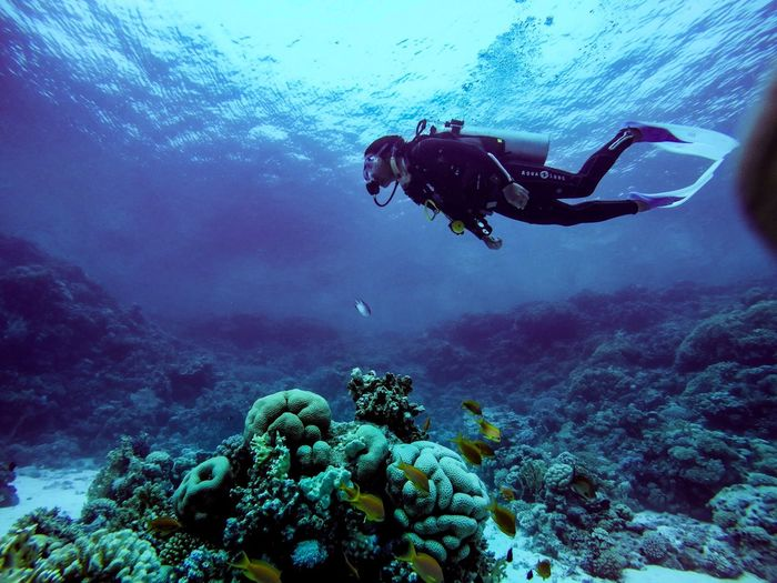 Scuba diver swimming in sea