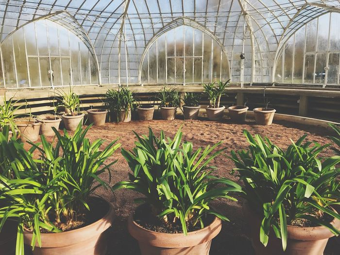 Greenhouse Plant Growth Potted Plant Plant Nursery Agriculture Indoors