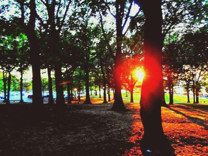 Park Newyork