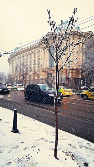 Outdoors Day Nature Season  Nature Photography Beauty In Nature Snowing Snow ❄ Snow Colorful Colour Of Life Colors Winter Time Winter 2017 Winter Winter Snow ❄ Snowing Multi Colored View Built Structure Building Exterior Architecture Traffic Cars Snow Day Sofia University