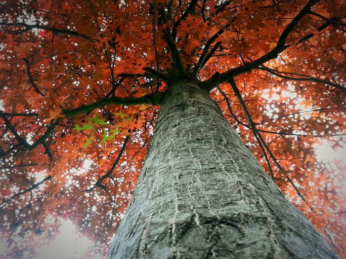 The beauty of nature Hugging A Tree Nature Tree True Colors