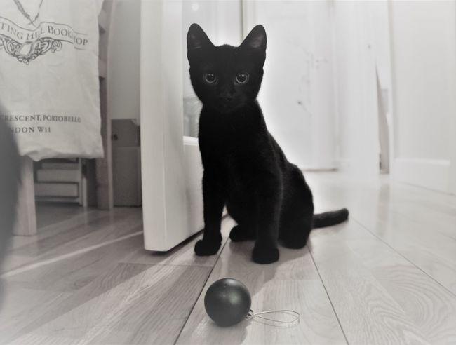 First Eyeem Photo Black Cat Black Cat Photography Cats Of EyeEm Cat