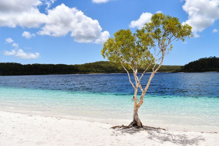 Water Tree Sky Cloud - Sky Plant Beauty In Nature Land Scenics - Nature Tranquility Nature Tranquil Scene Beach Day Sea Blue No People Growth Outdoors Idyllic Turquoise Colored
