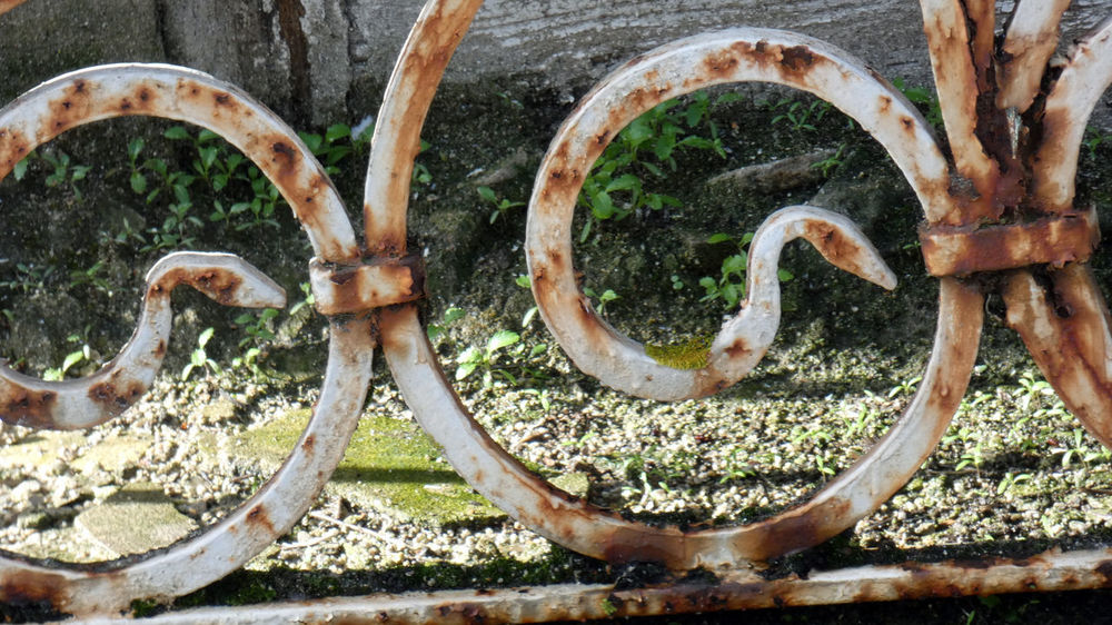 Old vs Nature. No People Day Nature Circle Geometric Shape Animal Animal Themes Land Close-up Rusty Metal Outdoors Transportation Plant Animal Body Part Water Shape Animal Wildlife Snake Side View Wheel Nature Old Old-fashioned Old Buildings