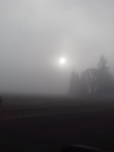 Morning Sun Trees And Nature Freshness Morning Glory Fog Landscape No People Nature Outdoors Tranquility Scenics Beauty In Nature Day