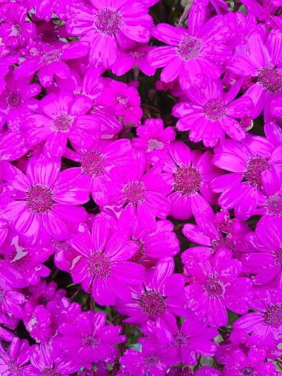 Flower Pink Wet