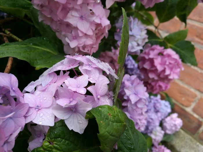 Gradation Flower Rain
