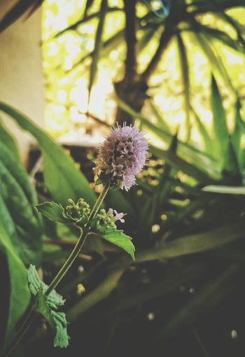 Nature No People Flower Beauty In Nature Close-up Focus On Foreground Purple Day Leaf One Animal Plant Animal Wildlife Outdoors Animals In The Wild Fragility Growth Animal Themes Freshness