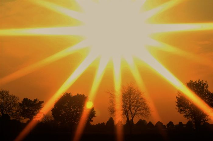 Beauty In Nature Day Filtered Image Low Angle View Nature No People Outdoors Silhouette Sky Star Filter Sun Sunbeam Sunlight Sunset Tree