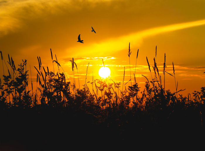 Animal Animal Themes Beauty In Nature Bird Cloud - Sky Flying Growth Nature No People Orange Color Outdoors Plant Scenics - Nature Silhouette Sky Sun Sunlight Sunset Tranquil Scene Tranquility Vertebrate