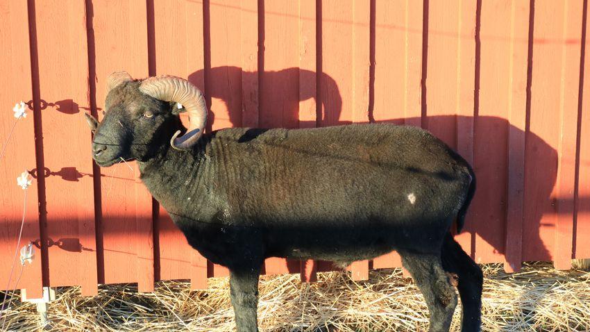 EyeEm Selects Animal Animal Themes Mammal Sunlight Shadow Vertebrate