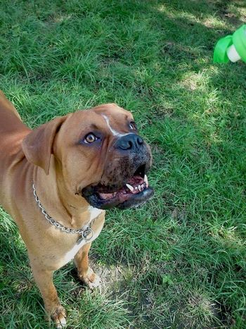 Baxter Dog Cute Pets
