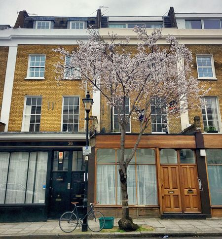 London in Springtime Building Exterior Architecture Built Structure Tree Cycling Bicycle Tree London City Day City No People Postcode Postcards Postcode Postcards