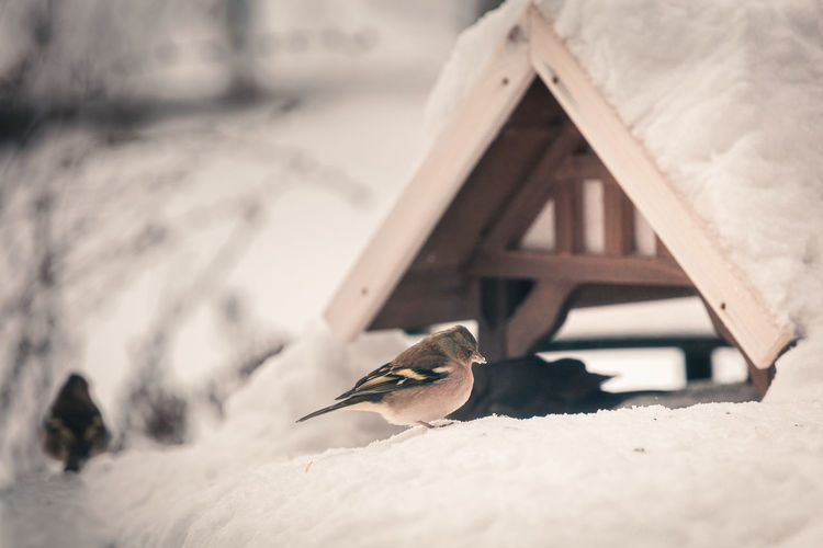 Bird on a snow