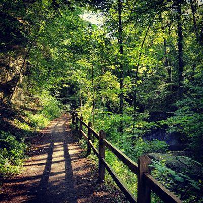 Woods Wald Waldspaziergang Sunlight Landscape Green Waldweg