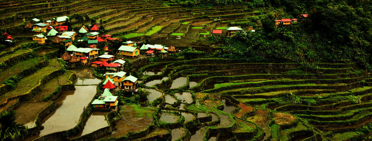 Tourist Attraction  World Heritage Agriculture Batad Rice Terraces Farm Field Growth Landscape Outdoors Rice Paddy Rural Scene Scenics Terraced Field Travel Destinations Water
