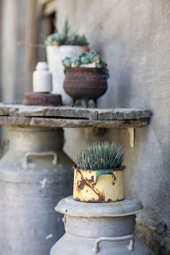 Succulents Neiu Bethesda No People Pot Plant Potted Plant Rural Rustic Rusty South Africa Succulents