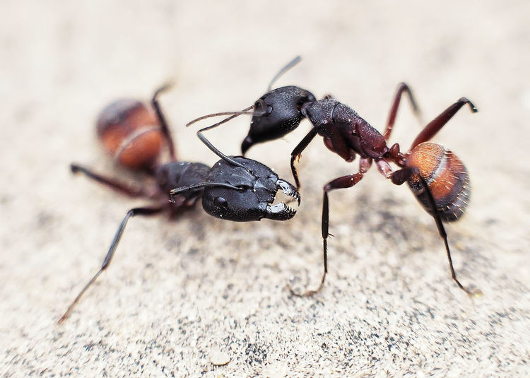 Close-Up Of Ants On Surface