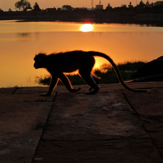 India Urban Wildlife Nature Badami Monkey Citylake Tail Nature's Diversities Feel The Journey 43 Golden Moments Color Palette TakeoverContrast Finding New Frontiers Miles Away The Secret Spaces Breathing Space Be. Ready. An Eye For Travel Focus On The Story