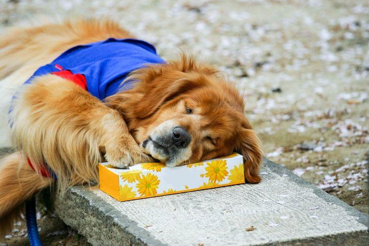 眠い…… Pets
