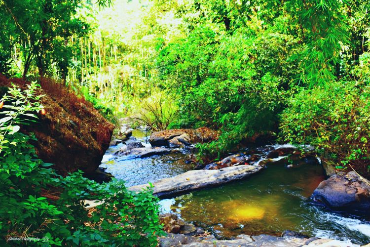Clicked On Nikon D3300 Tree Beauty In Nature Growth Plant Stream Day Outdoors Waterfall Nature