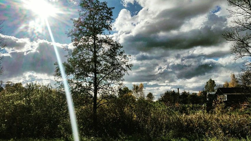 EyeEm Ready   EyeEmNewHere Tree Sunlight Sunbeam Nature Day Sky Sun No People Growth Outdoors Beauty In Nature Cloud - Sky Grass Scenics AI Now Shades Of Winter An Eye For Travel Idyllic Tranquility Shore Horizon Over Water Remote Grassland Ocean Countryside Forest Fire Streaming Tree Area