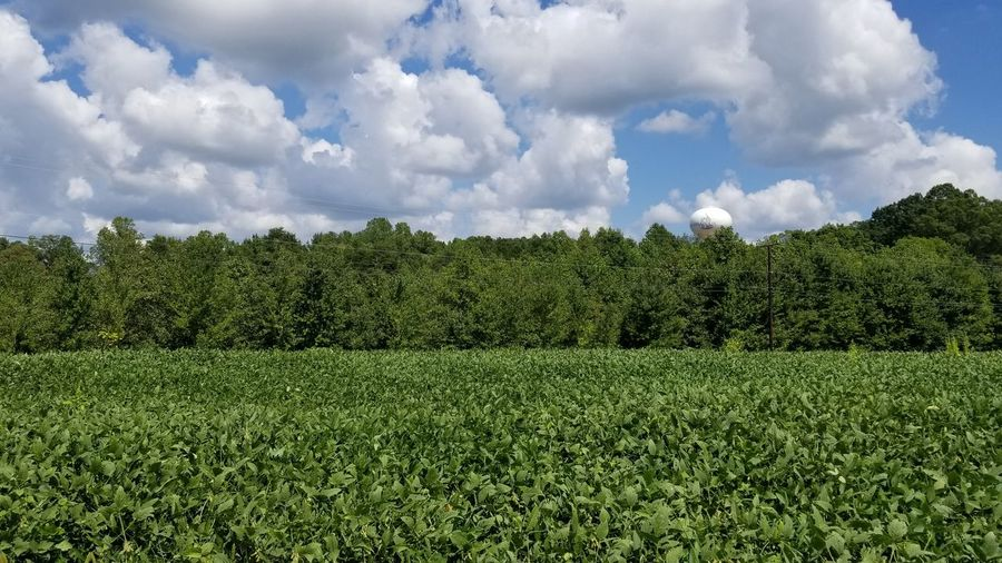 Growth Plant Life Blue And Green Agriculture Clouds And Sky Backgrounds Agriculture Crop  Sky Cloud - Sky Green Color