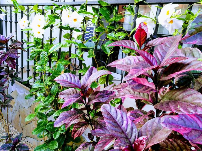 Nature Plant Growth Outdoors Beauty In Nature No People Day Leaf Flower Fragility Close-up Garden Pink Leafs Withe Flower Blooming Flower Head Beauty In Nature Petal Freshness Plant