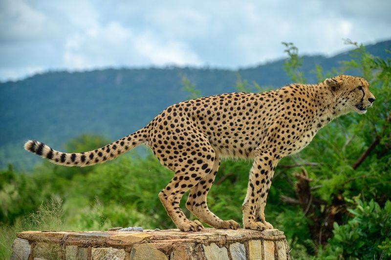 Krugerpark 25
