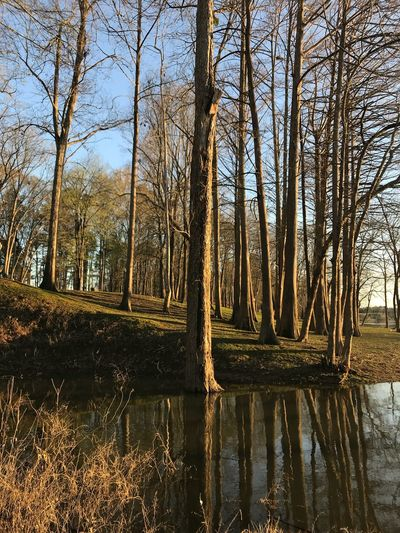 Nature_collection Tree Reflection Tranquil Scene Tranquility Nature Water Lake Beauty In Nature Outdoors Bare Tree Scenics No People Landscape Forest Day Tree Trunk Sky Travel Destinations Grass