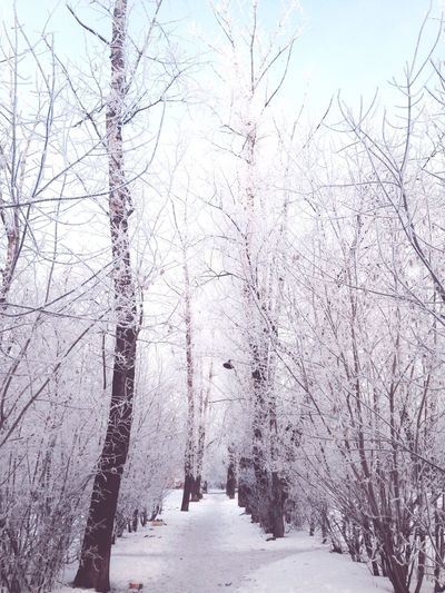 Winter Snow Followme Russia Likeforlike Amazing зима снег сказка Россия