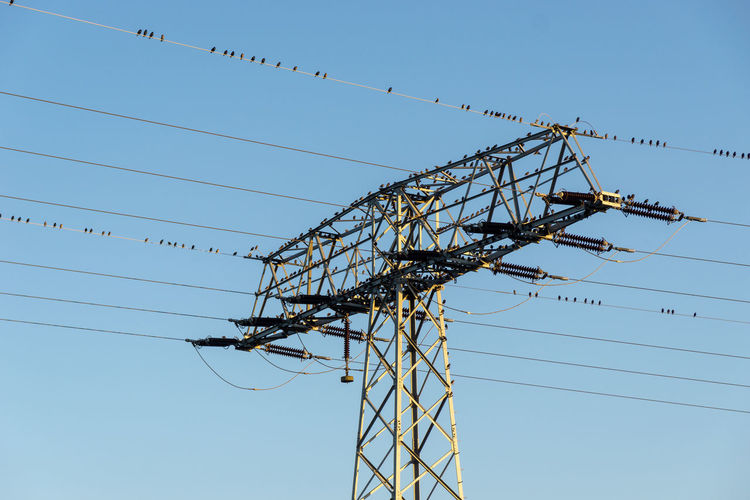 birds at a high voltage power line and power pylon Electricity  Power Line  Power Supply Day Metal Outdoors Fuel And Power Generation Clear Sky Sky Blue Connection Cable Low Angle View Technology Nature Electricity Pylon Electrical Equipment No People Complexity Industry Flock Of Birds Birds EyeEm Best Shots EyeEm Nature Lover