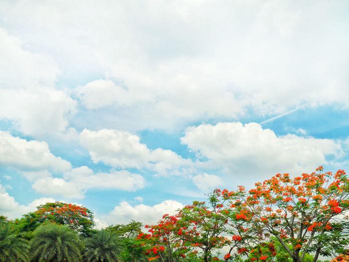 red flower,