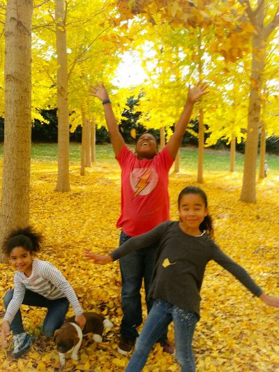 Kids having fun autumn yellow leaves tree grove Taking Photos Enjoying Life