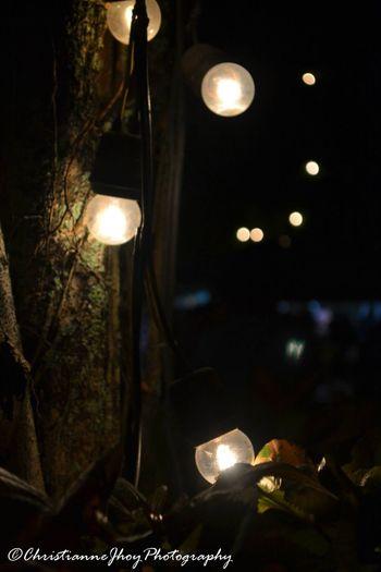 Lights. Lights Ekadventure