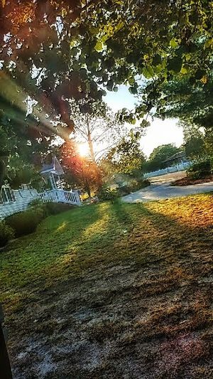 Hidden Gems  Beatiful Sunrise Loving Life  Nature Nature On Your Doorstep The Most Beautiful Things Are The Most Simple Thin Front Yard Photography Rays Of The Sun Pure Eccentric Energetic Light Lifes Good: in LEXINGTON S.C. Neighborhood Map