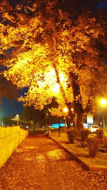 Otoño 🍁 Frutos D Otono OpenEdit Popular Photos Photography Chile♥