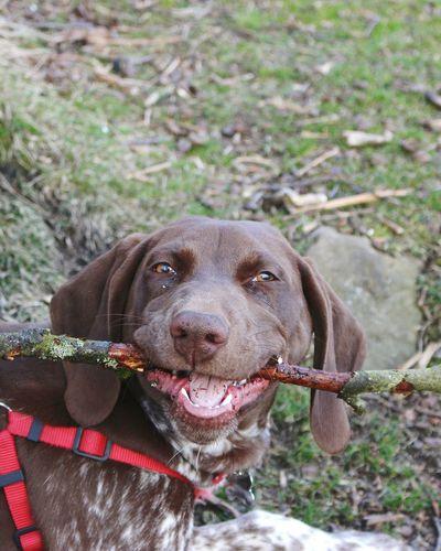 Happy Dog Stick