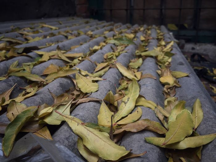 Close-up of leaves on corrugated iron