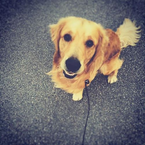 Hundvakt åt världens bästa Hubbe☺️ Hundvakt 2015