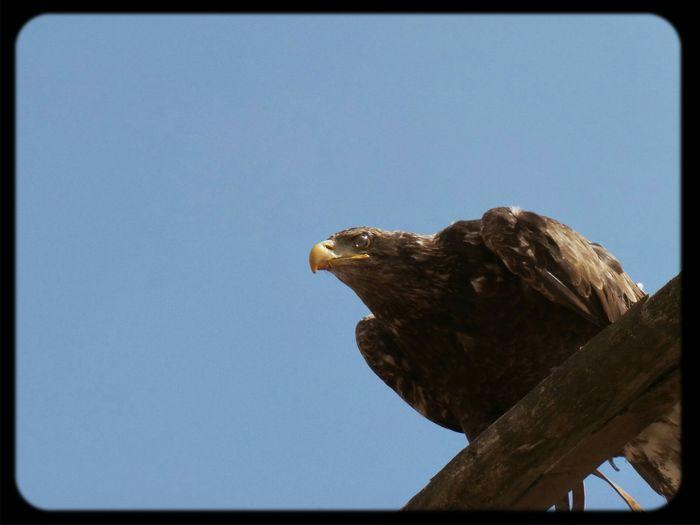 Zoo D'amneville Zoo D'amneville Aigle Eagle