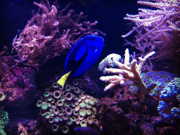Underwater Sea Life UnderSea Water Coral Animal Themes Animals In The Wild Fish Nature Sea One Animal Blue Clown Fish Beauty In Nature Animal Wildlife Aquarium Close-up Colors Amazing Seascape No People Outdoors Beauty In Nature Capture The Moment Nature