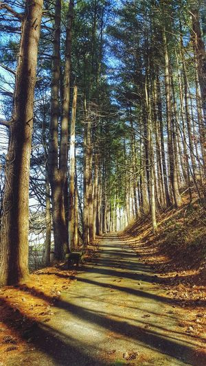 Outdoors No People The Way Forward Nature Beauty In Nature Tranquility Light And Shadow Nature Photography Capture The Moment EyeEm Nature Lover Nature Walk Path In Nature Trees The Great Outdoors - 2017 EyeEm Awards