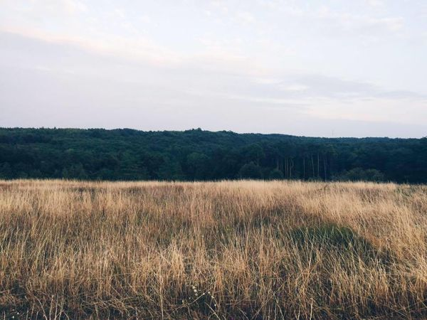 Beauty In Nature Crop  Day Field Grass Green Green Color Growth Landscape Nature Outdoors Summer