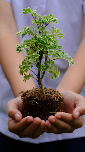 Plant Life Day Abstract Background Happy Relax Growth Meaning Human Hand Environmentalist Tree Handful Responsibility Care Planting Hands Cupped Savings New Life Dirt Gardening Soil Sapling Plowed Field Horticulture Seedling Worn Out Young Plant Social Responsibility Bonsai Tree Community Garden