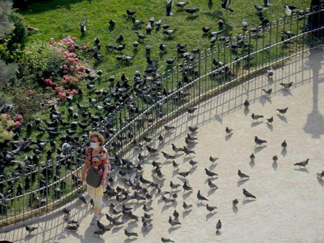 Pigeons Invasion Pigeons ATTACK View Paris Notre-Dame Green Grey Birds Visiting