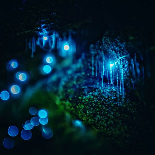 Glowworms Closeup - Nature's Mini LightPainters What an incredible expirience. It felt like being in an alien world. #visitaustralia #visitnsw #naturephotography #glowworm #glowworms #sydney #ilovesydney #igerssydney #visitnsw #australia