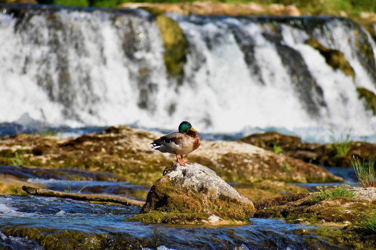 View of bird on rock
