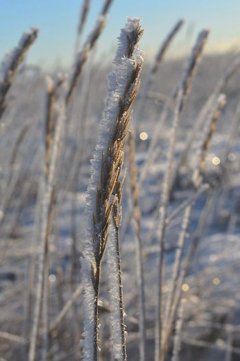 Close-up of frozen plant on field against sky