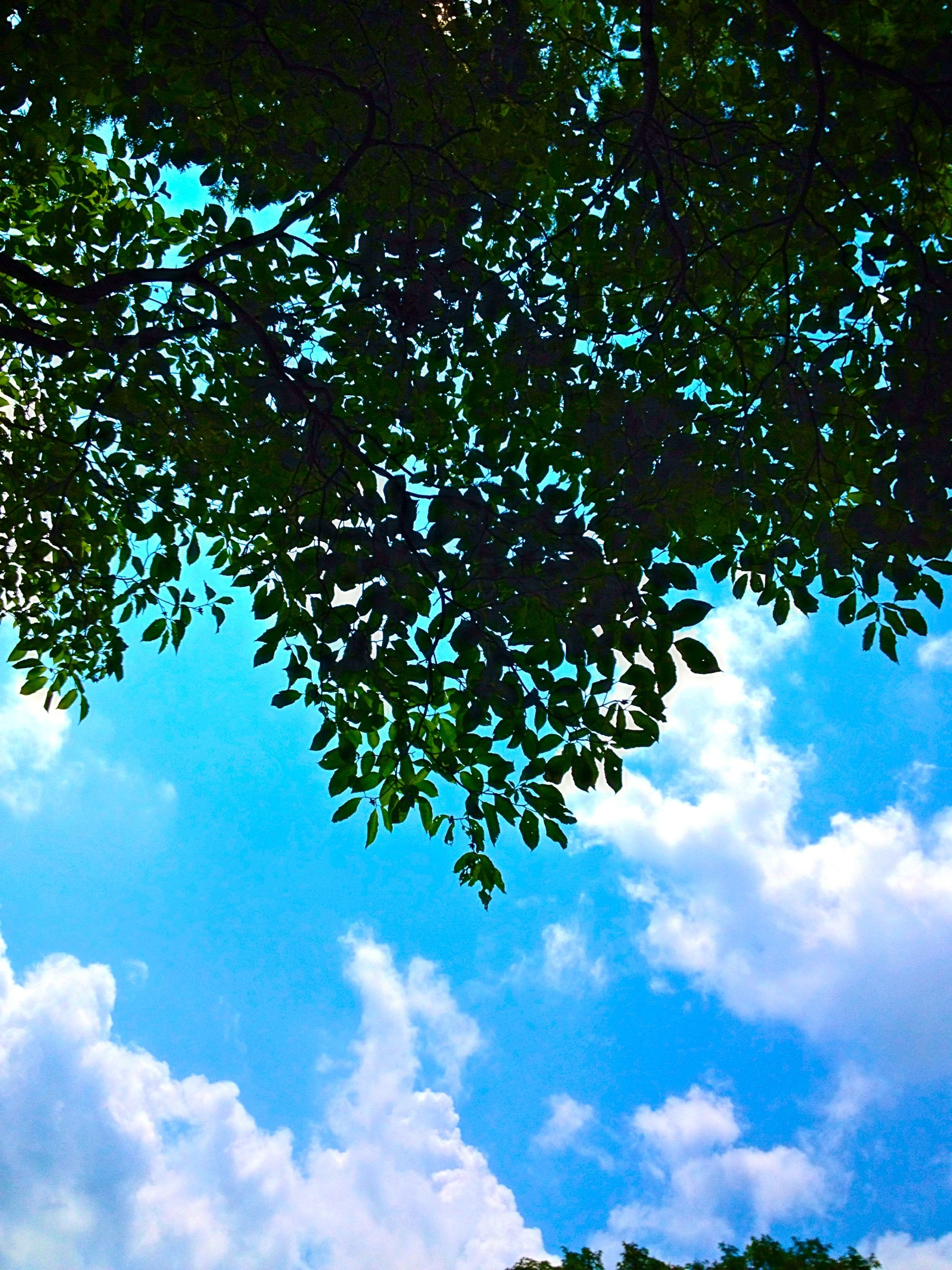 low angle view, tree, sky, cloud - sky, branch, tranquility, nature, beauty in nature, blue, cloud, growth, scenics, cloudy, tranquil scene, day, sunlight, outdoors, no people, leaf, idyllic